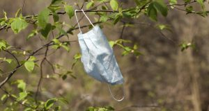 Used medical mask hangs on a branch. The end of the pandemic. Concept - breathe freely.